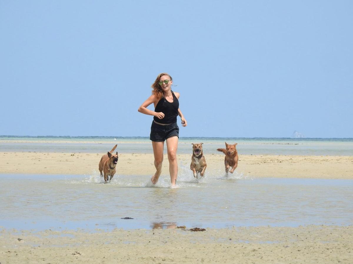 Getting a Dog or other Pet on Koh Phangan | Koh Phangan Online Magazine