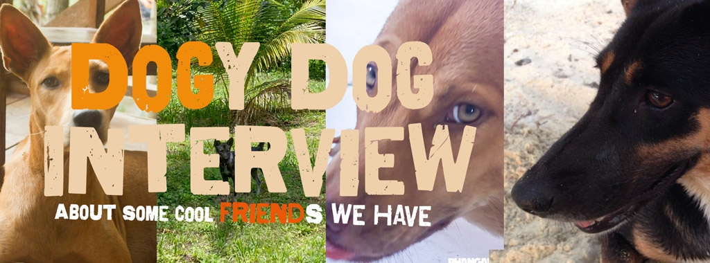 dogi-dog-interview.jpg