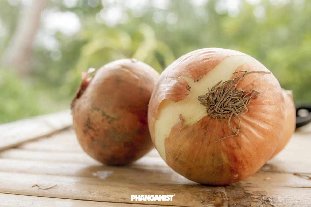 Don't Cry, Onions are Great Really! | Koh Phangan Online Magazine