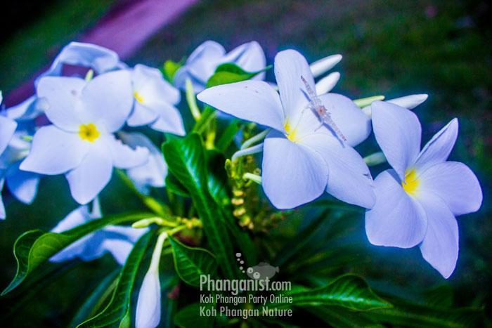 Koh Phangan weather forcast